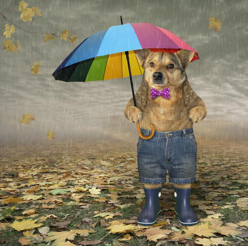 Dog with umbrella in autumn park 2 stock photo