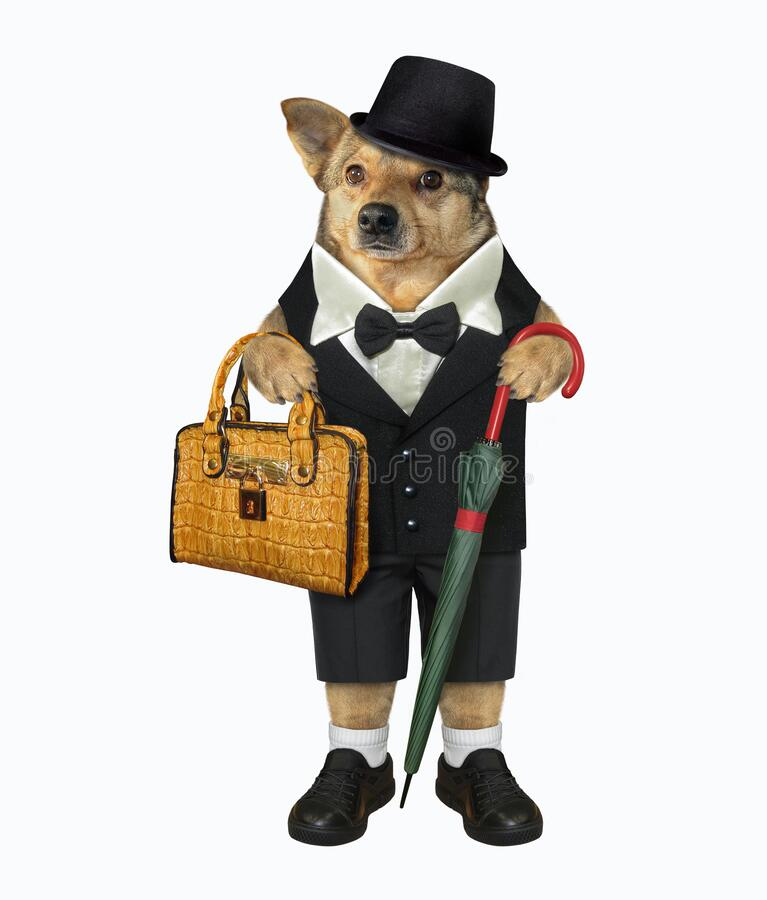 Dog with umbrella and briefcase royalty free stock image