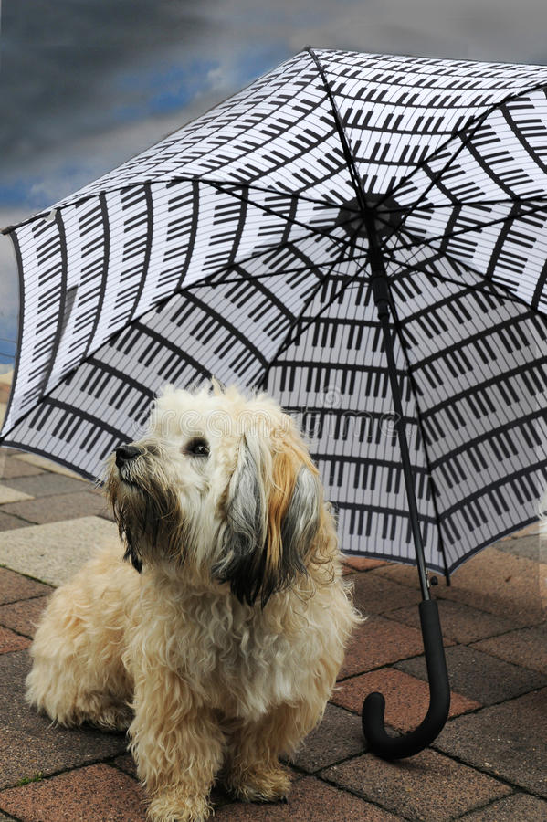 Dog under an umbrella. Little dog under an umbrella waiting for the end of raining stock photography