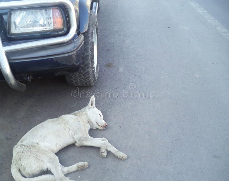Dog under wheel royalty free stock photos