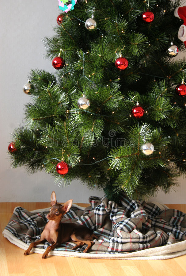 Dog under xmas tree royalty free stock photography