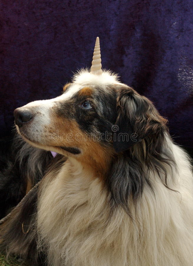 Download Dog unicorn stock photo. Image of gothic, make, over - 11009744