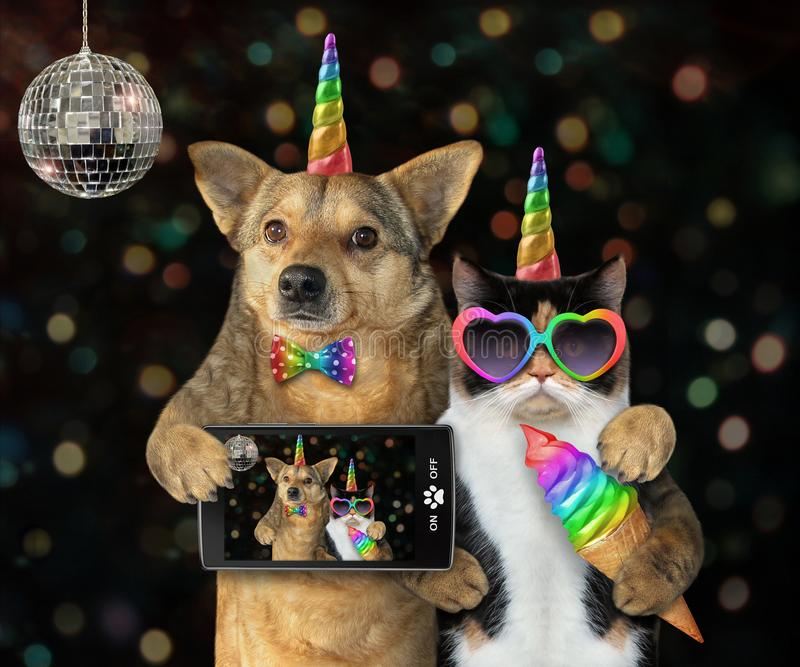 Dog with a cat unicorn at a party stock photo