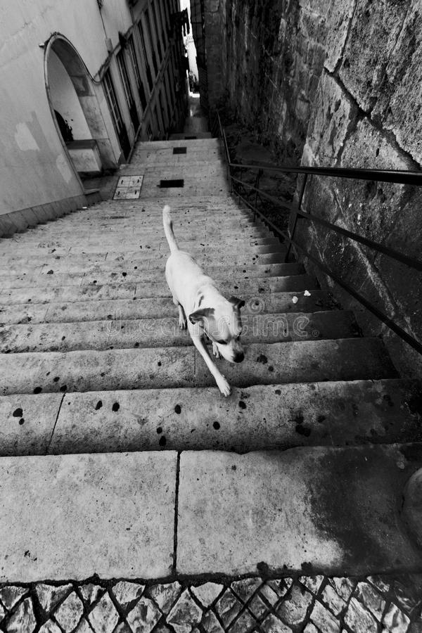 Dog upstairs in Lisbon stock photo