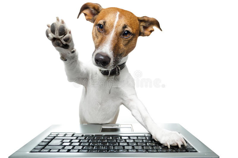 Dog using a computer royalty free stock photo