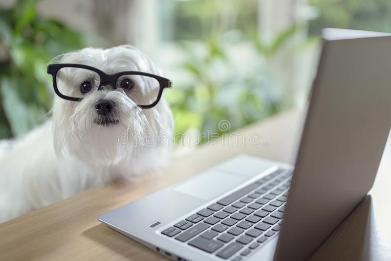 Dog using laptop computer stock photos