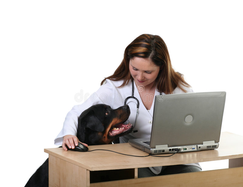 Dog at the vet. Veterinarian and dog patient sitting at the desk, isolated on white