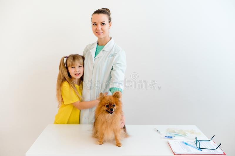 Dog with a vet royalty free stock photography