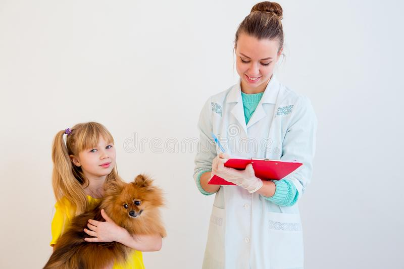 Dog with a vet stock image