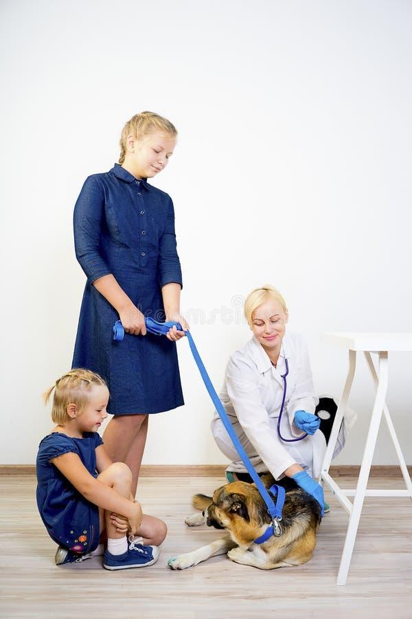 Dog at a vet. A portrait of a dog at a vet checkup stock image