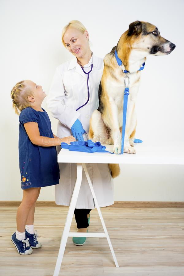 Dog at a vet. A portrait of a dog at a vet checkup stock photography