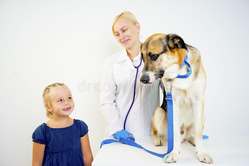 Dog at a vet. A portrait of a dog at a vet checkup royalty free stock photos