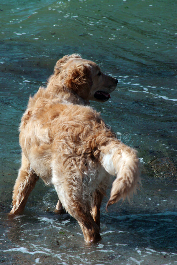 Download Dog wading through water stock image. Image of happy, profile - 103125