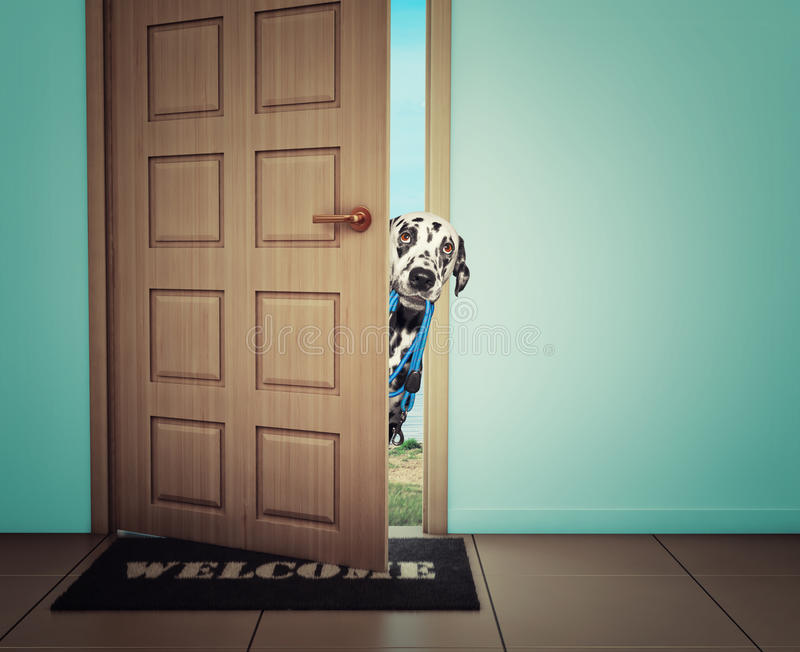Dog waiting near the door with leather leash, ready to go for a walk with his owner stock photography