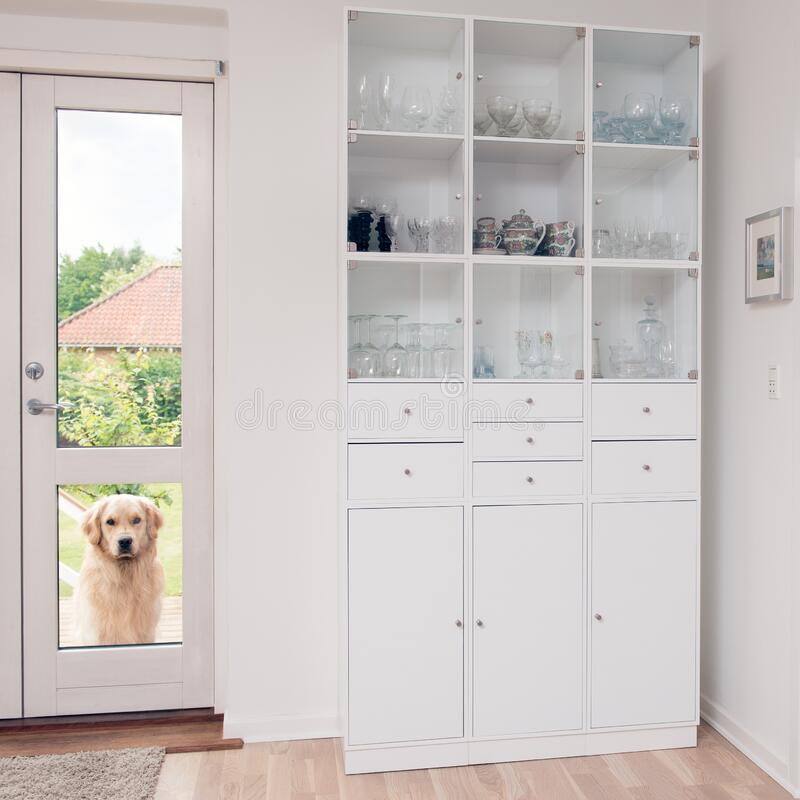 Dog waiting outside door royalty free stock photo