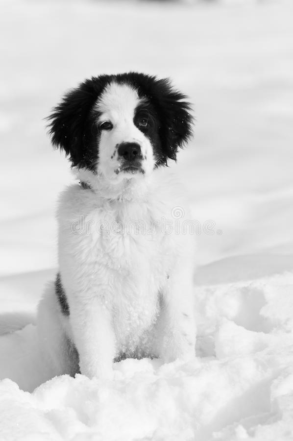 Dog waiting in snow stock photos