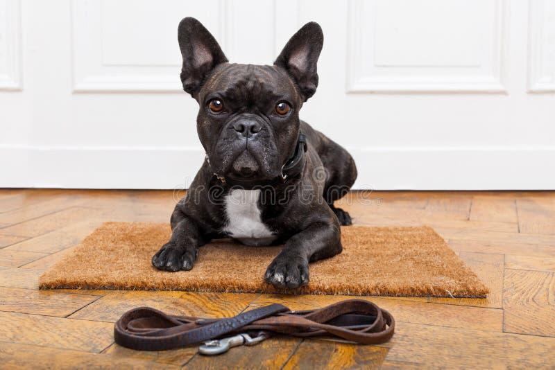 Dog waiting for walk royalty free stock image