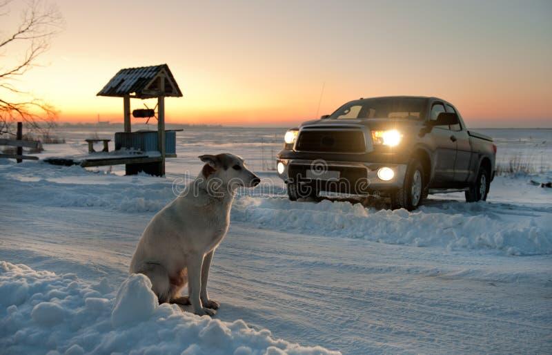 The dog waits at road. stock image
