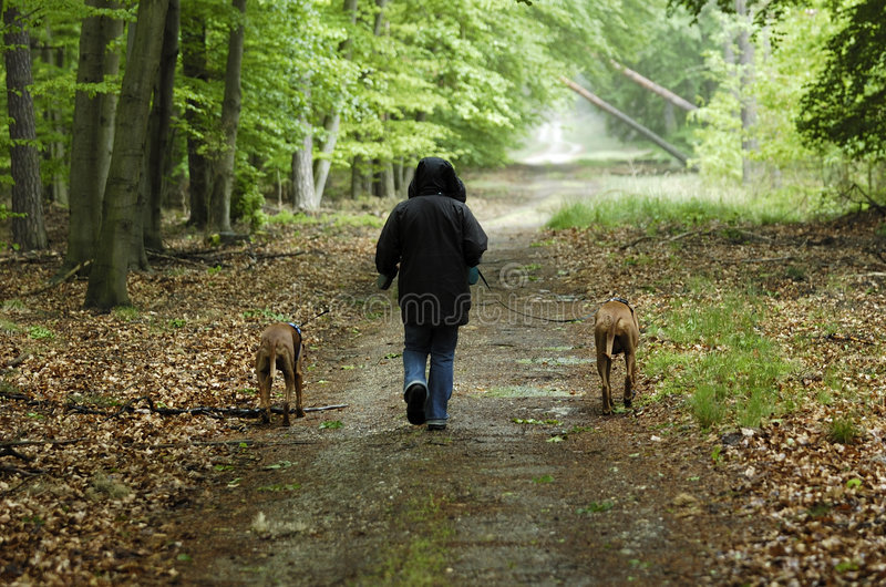 Dog walk stock photos