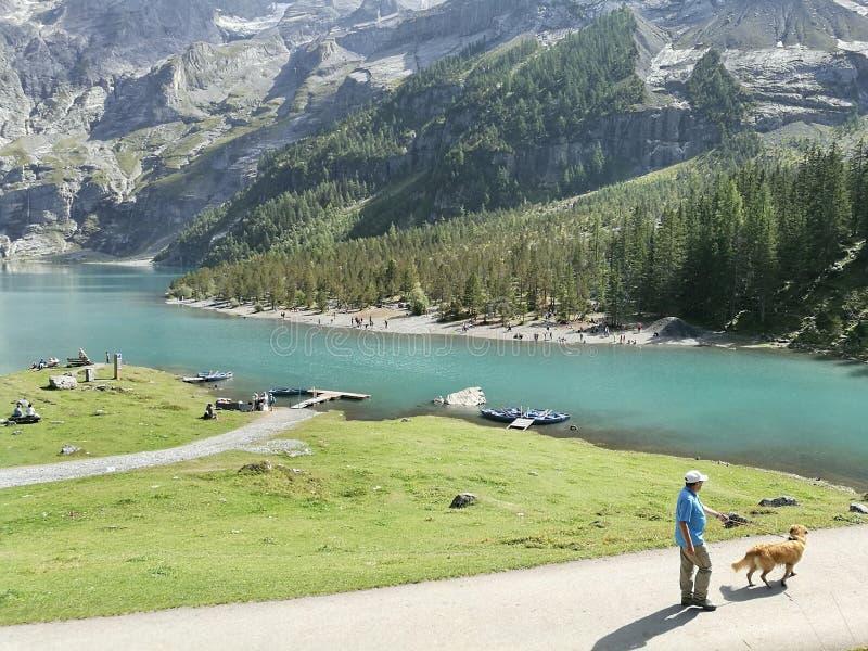 Dog walk. Man and dog at Switzerland royalty free stock image