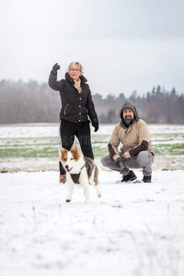 Dog walk on the winter season with snow. Women and men playing with the pet royalty free stock photos