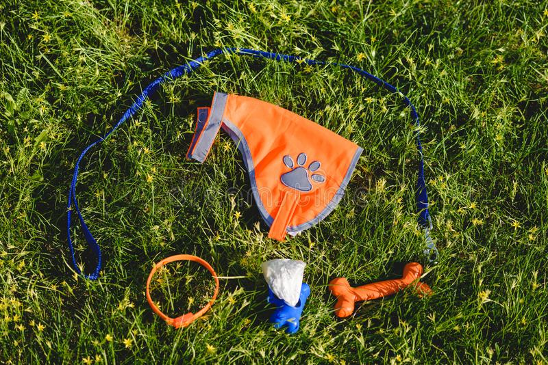 Dog walker accessories leash, coat, collar, bag dispenser, toy bone laying on green grass. Everything you need for dog walking stock photography