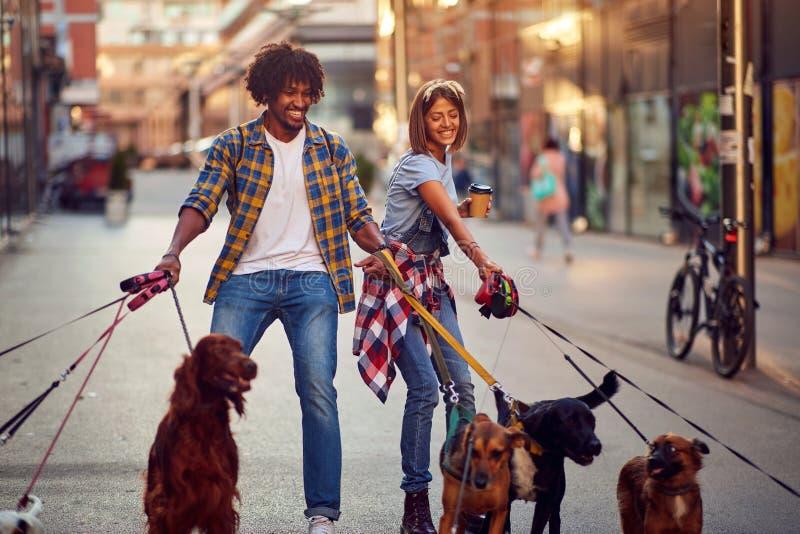 Dog walkers with dog enjoying in city. Dog walkers with group dog enjoying in city royalty free stock photos