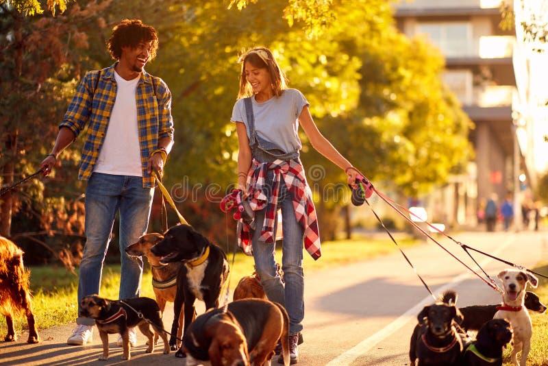 Dog walkers with dog enjoying in park. Dog walkers with group dog enjoying in park stock photos