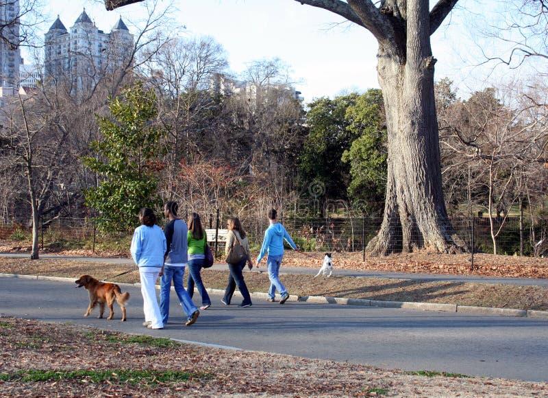 Download Dog Walking stock photo. Image of women, piedmont, boys - 1717270