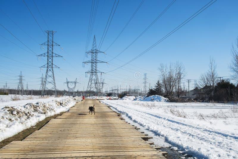 Dog walking on a boardwalk. Dog walking on a bordwalk landscape in a power plan on a nice winter day stock images