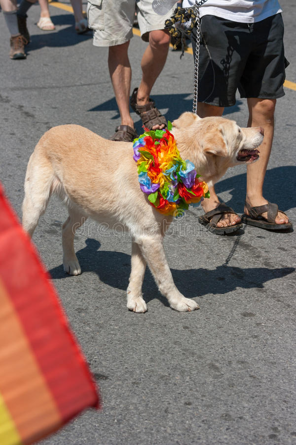 Download Dog Walking In Capital Pride Parade Editorial Stock Image - Image of editorial, outdoor: 34346974