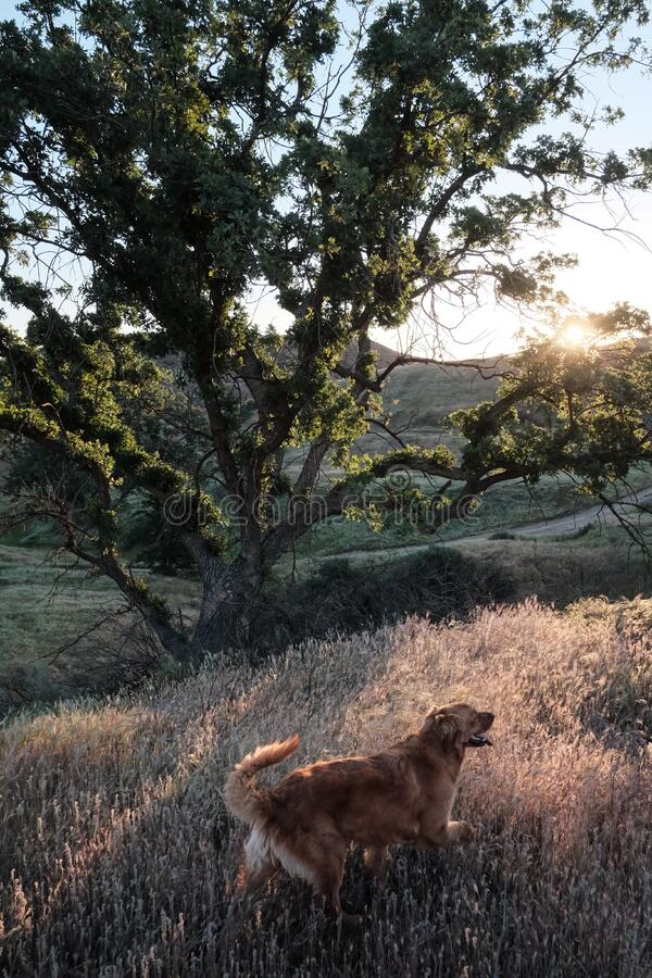 Dog Walking In Field Free Public Domain Cc0 Image