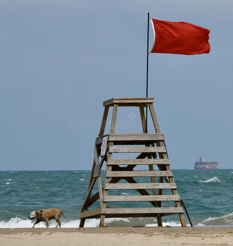 A Dog Walking on Oak Street Beach. This is a Summer picture of a dog walking along Oak Street Beach on Lake Michigan past the lifeguard station and the red flag stock photography