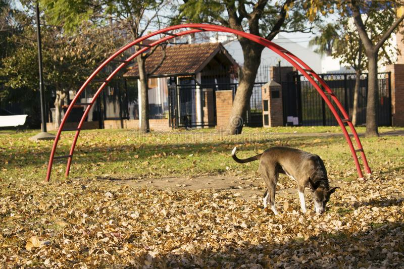 Dog walking in the park royalty free stock photos
