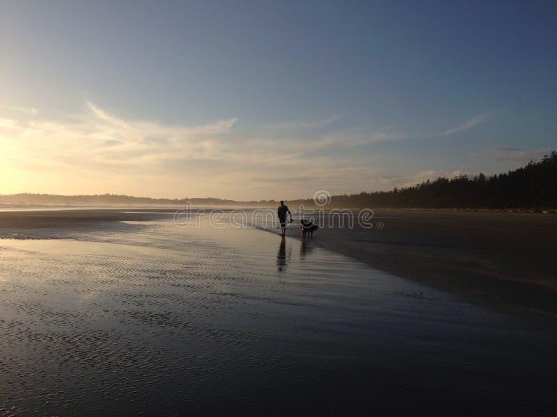 Dog walking at sunset stock image