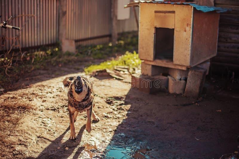 Dog. The dog walks around his kennel stock photo