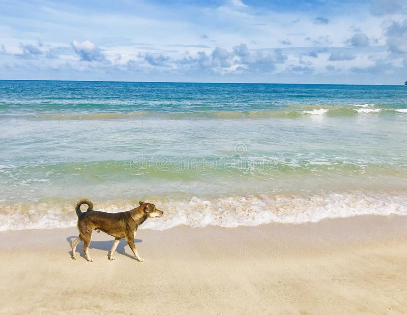 Dog walks through sandy beach royalty free stock photo