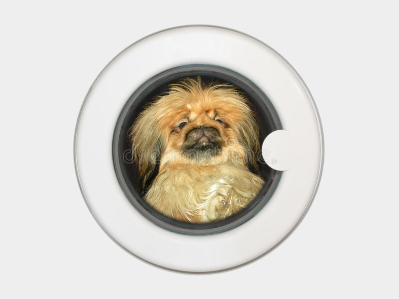 Download Dog in washing machine stock photo. Image of detergent - 1711152