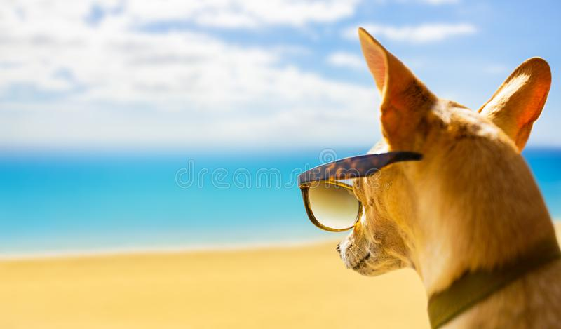 Dog watching the beach on summer stock image