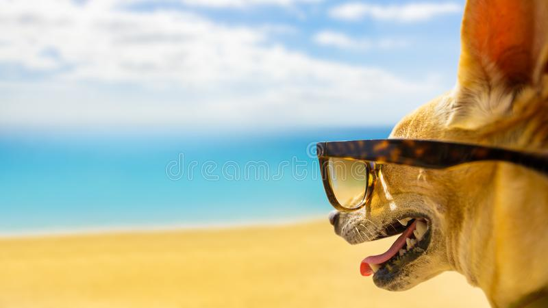 Dog watching the beach on summer stock photography