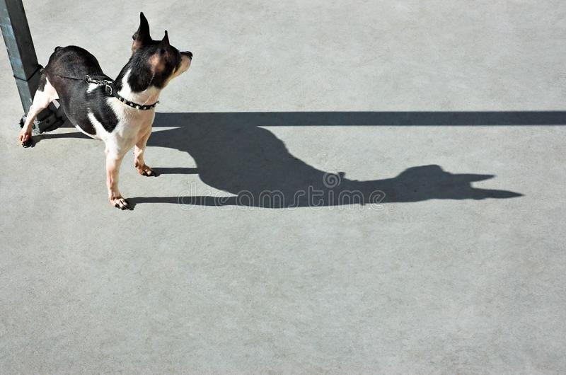 Dog Watching Dog stock image