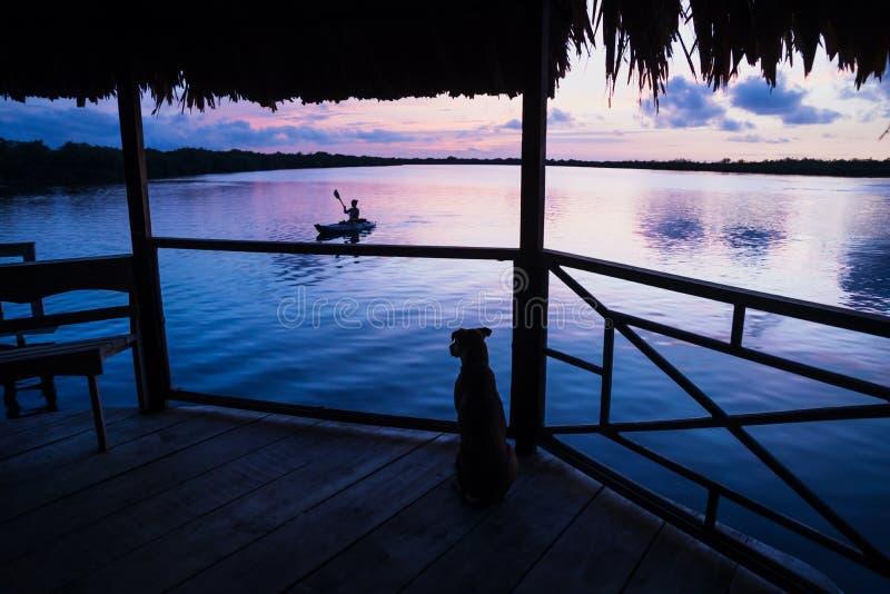 Dog watching girl in kanu during sunset at lagoon on dock in Utila, Honduras, Central America stock photos