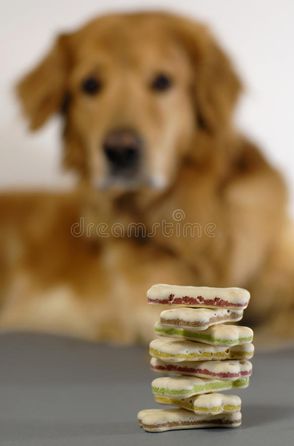 Download Dog, watching his bisquits stock image. Image of feed - 9502309
