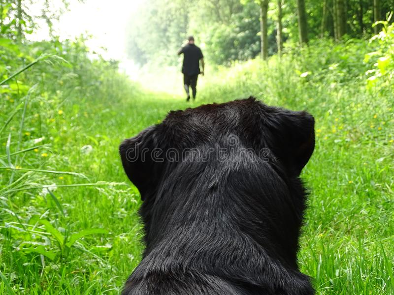 Dog Watching Man Walking In Forest Free Public Domain Cc0 Image