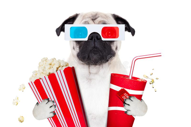 Dog watching the movies stock image
