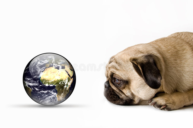 Dog watching our world stock photo