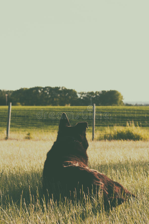 Dog Watching the Prairie stock images