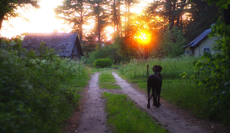 Dog watching sunset stock photo