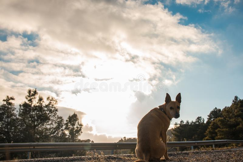 Dog watching a sunset. With the sky in the background. royalty free stock photo