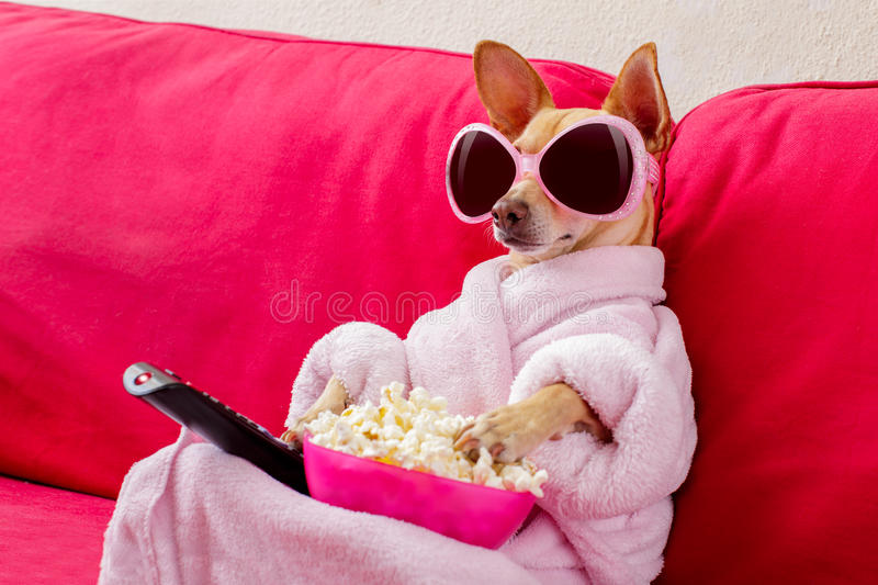Dog watching tv on the couch royalty free stock photo
